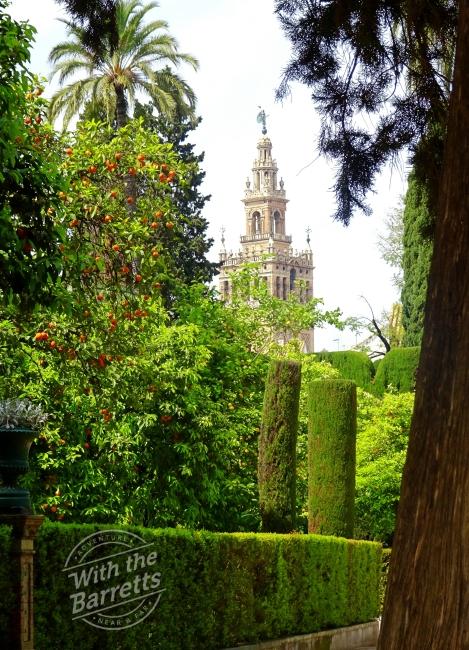 Orange Trees Seville
