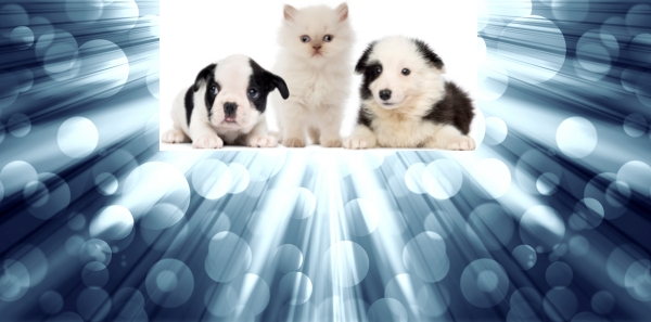 cute puppies and a kitten with a spectacular backdrop