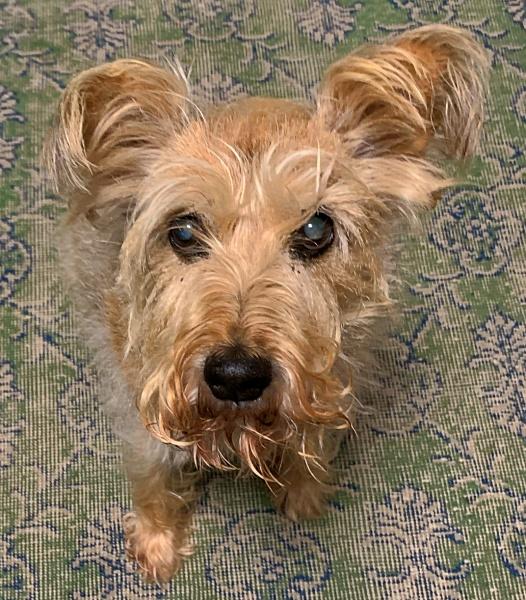 Effie the Wonder Dog